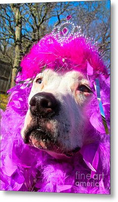 Stop Bsl Officer Do You Hate Me Because I'm A Pit Bull Or Cause I'm A Dude Wearing A Pink Tiara? Metal Print by Q's House of Art ArtandFinePhotography