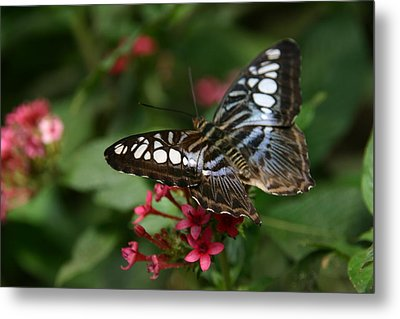 Metal Print featuring the photograph Stopping By by Denyse Duhaime