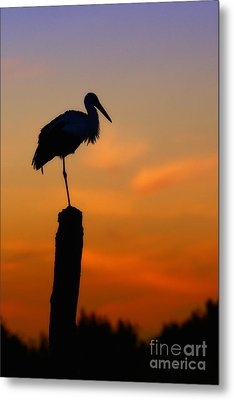 Metal Print featuring the photograph Storck In Silhouette High On A Pole by Nick  Biemans