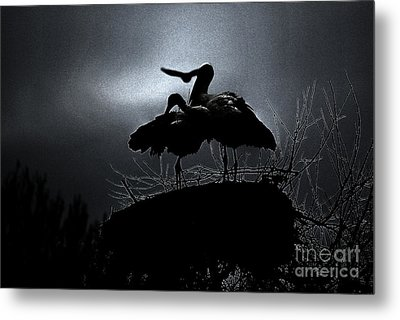 Stork Couple Metal Print