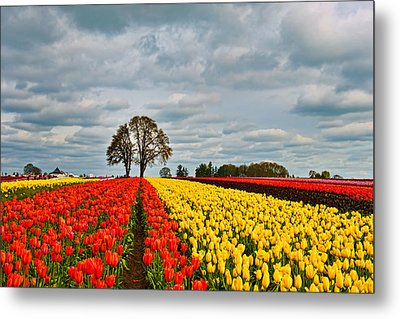 Storm Over Wooden Shoe Tulip Farm Metal Print by Peter Dang