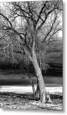 Metal Print featuring the photograph Storm Tree by Steven Reed