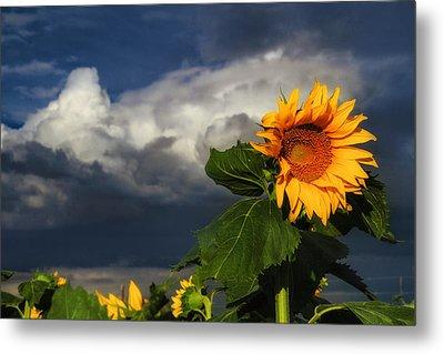 Stormy Sunflower Metal Print