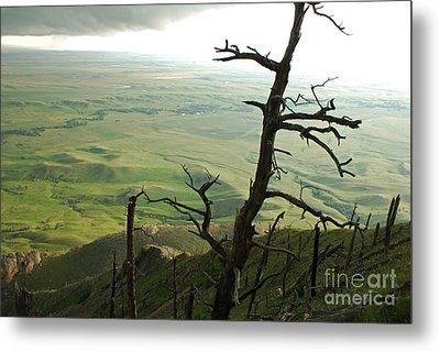 Metal Print featuring the photograph Stormy Tree by Mary Carol Story