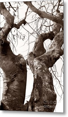 Story Tree Metal Print by Jennifer Apffel