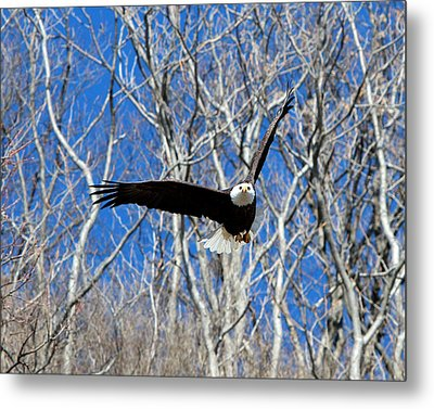 Metal Print featuring the photograph Straight On For You. by John Freidenberg