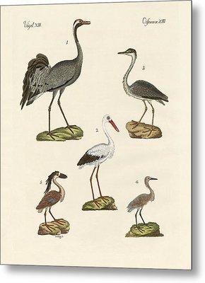 Strange Beach Birds Metal Print