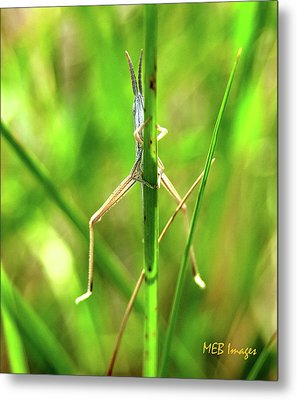 Strange Bug Metal Print by Margaret Buchanan