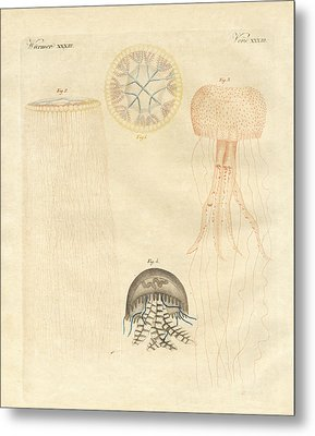 Strange Medusas Metal Print by Splendid Art Prints