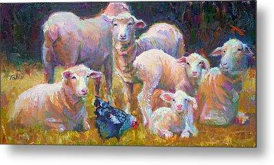 Stranger At The Well - Spring Lambs Sheep And Hen Metal Print by Talya Johnson