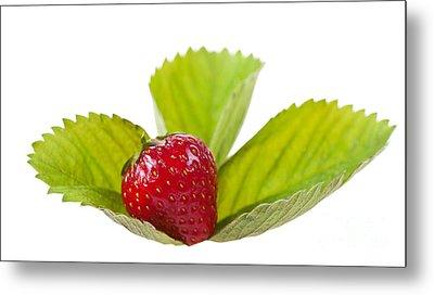 Ripe Strawberry Fruit Lying On Leaf On White  Metal Print