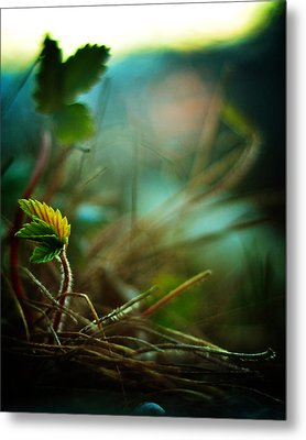 Strawberry Sunrise Metal Print by Rebecca Sherman