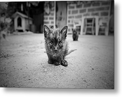 Metal Print featuring the photograph Stray Cat #1 by Antonio Jorge Nunes