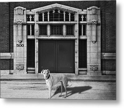 Street Dog Metal Print by Larry Butterworth