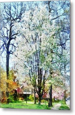 Street With White Flowering Trees Metal Print by Susan Savad