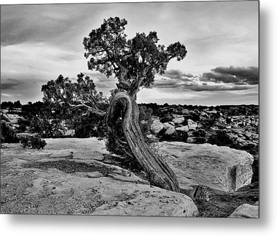 Strength Black And White Metal Print by Benjamin Yeager