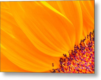 Metal Print featuring the photograph Stretching Out by Jim Carrell