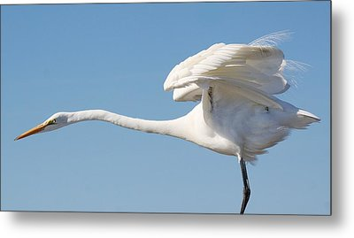 Stretching Out Metal Print by Paulette Thomas