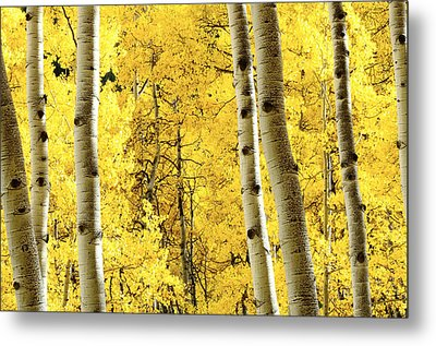 Striking It Rich Metal Print by The Forests Edge Photography - Diane Sandoval