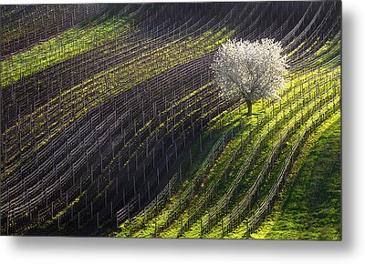 Strings Of Spring Metal Print