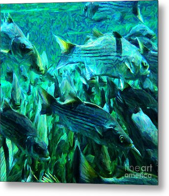 Striped Bass - Painterly V1 - Square Metal Print by Wingsdomain Art and Photography