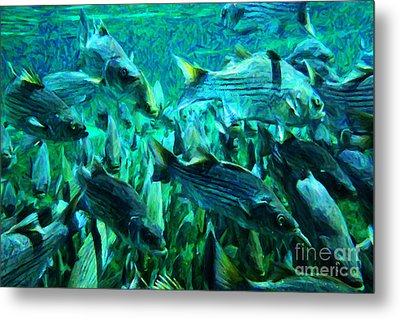 Striped Bass - Painterly V1 Metal Print by Wingsdomain Art and Photography