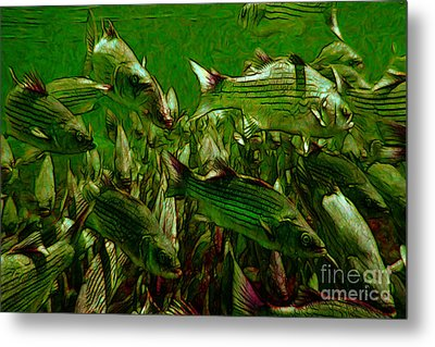 Striped Bass - Painterly V2 Metal Print by Wingsdomain Art and Photography