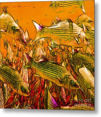 Striped Bass - Square Metal Print by Wingsdomain Art and Photography