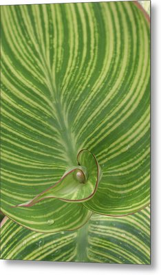 Striped Canna Leaf Abstract Metal Print by Anna Miller