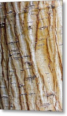 Striped Maple Metal Print by Steven Ralser