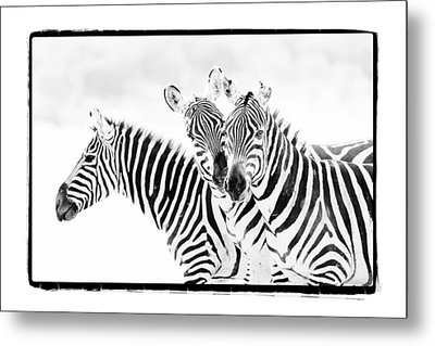 Metal Print featuring the photograph Striped Threesome by Mike Gaudaur