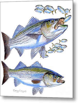 Stripers Metal Print by Carey Chen