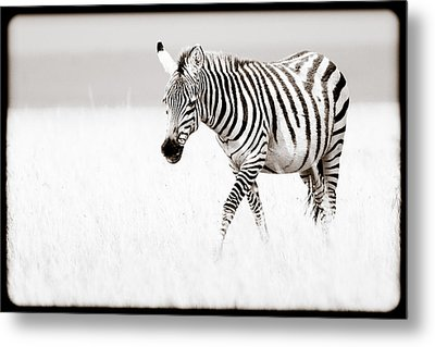 Metal Print featuring the photograph Stripes On The Move by Mike Gaudaur