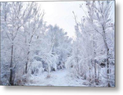 Stroll Through A Winter Wonderland Metal Print by Diane Alexander