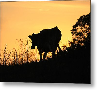 Metal Print featuring the photograph Strolling Into The Sunset by Penny Meyers