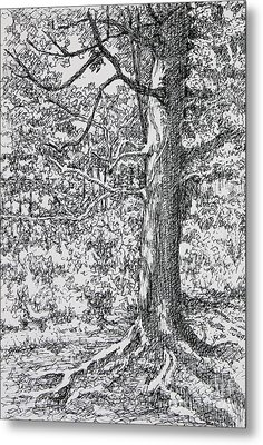 Strong Roots Metal Print by Janet Felts