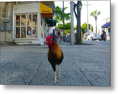 Metal Print featuring the photograph Strutting by Jon Emery