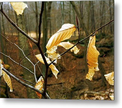Metal Print featuring the photograph Stubborn Leaves by Jackie Carpenter
