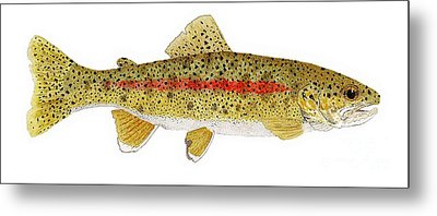 Study Of A Columbia River Erdband Trout Metal Print by Thom Glace
