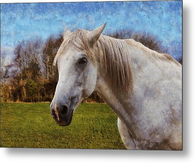 Study Of A Horse Metal Print by Paul Gulliver