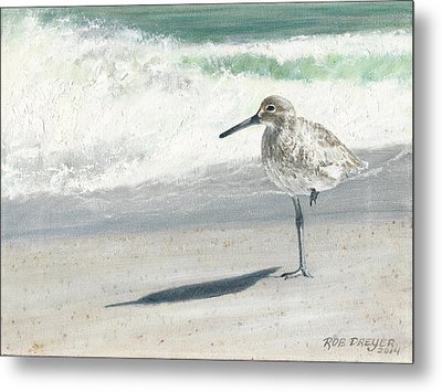 Study Of A Sandpiper Metal Print by Dreyer Wildlife Print Collections