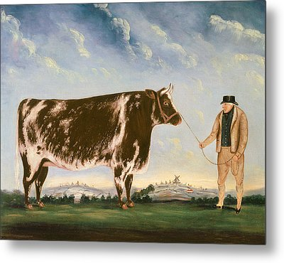 Study Of A Shorthorn Metal Print by William Joseph Shayer