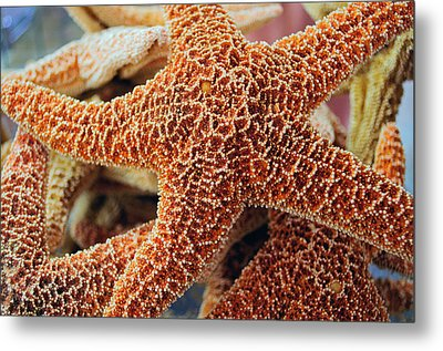 Study Of A Starfish Metal Print