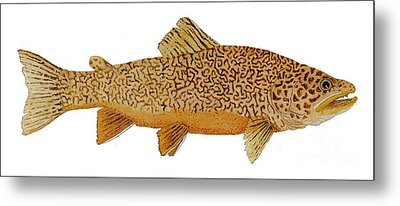 Study Of A Tiger Trout Metal Print by Thom Glace