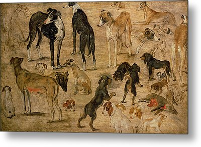 Study Of Hounds, 1616 Metal Print
