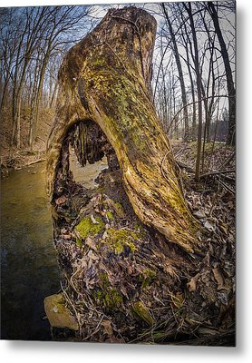 Stump Metal Print by Carl Engman