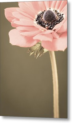 Subdued Anemone Metal Print by Caitlyn  Grasso