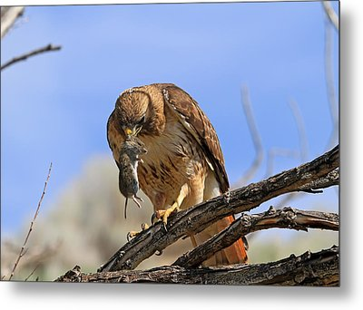 Successful Hunt Metal Print by Donna Kennedy