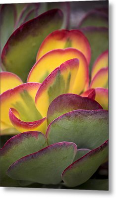 Succulent Light Metal Print by Garry Gay