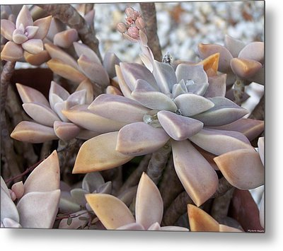 Succulent Metal Print by Michele Kaiser